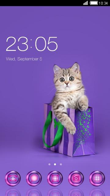 cute cate in purple box