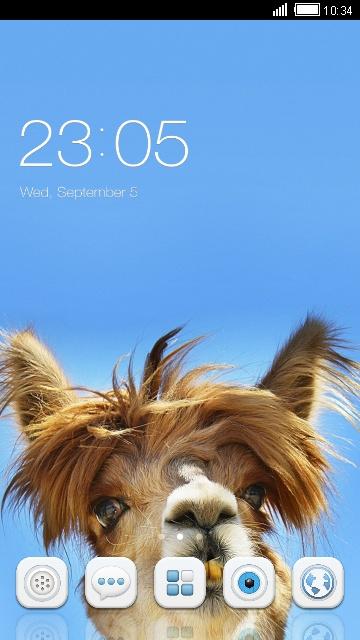 Cute Camel