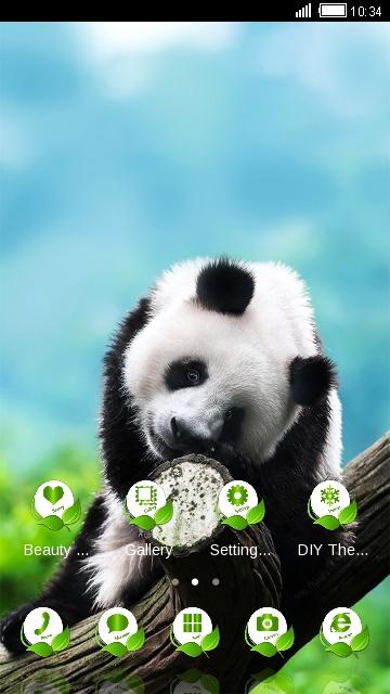 Cute panda Theme giant panda bear Wallpaper