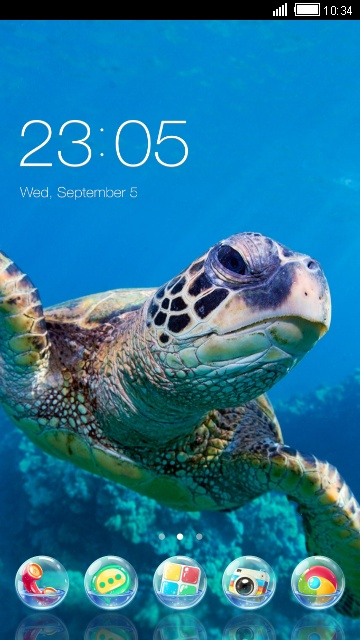 Sea Turtle Theme