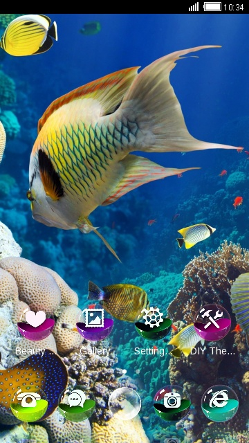 Aquarium : Real Sea World
