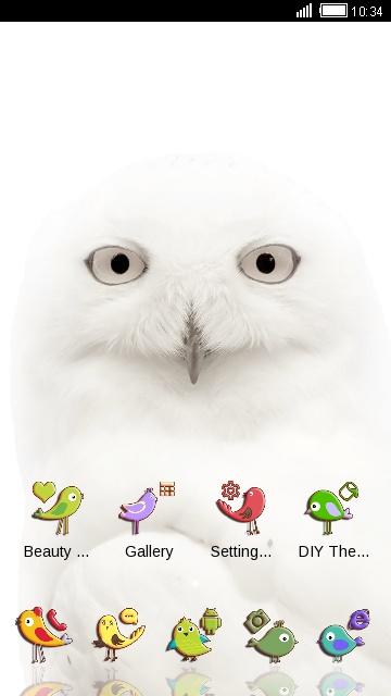White Owl Theme Funny Birds Live Wallpaper