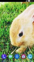 кролик=*