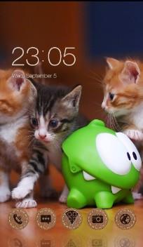 many cute cats