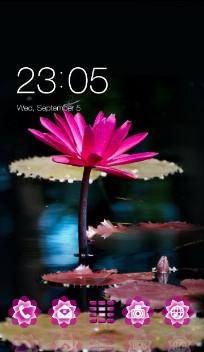 Pink Loutus Flower