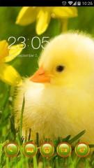 In the daffodils