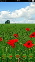 Red.Poppies