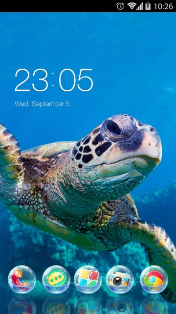 Sea Turtle Theme