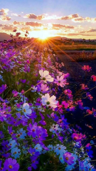 colorful flower sea