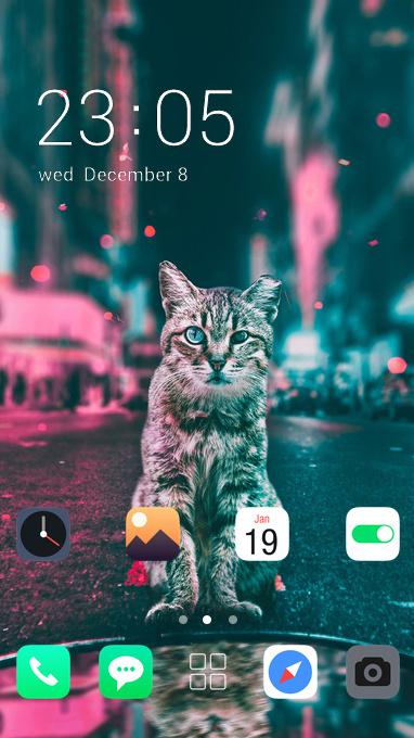 cat road lights