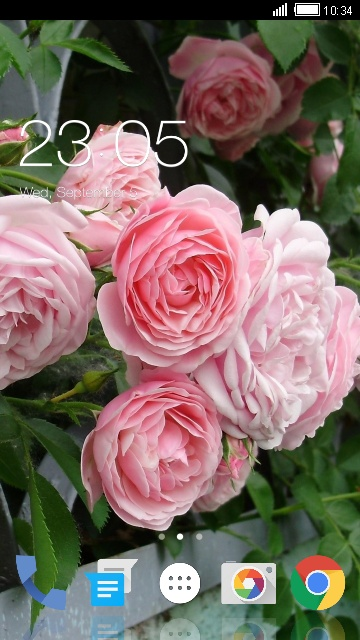 Theme for Spice FLO TV Rose Flower Wallpaper