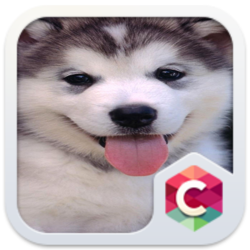 Theme for Micromax X234C Cute Puppy Wallpaper