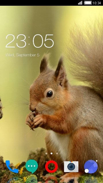 Theme for Karbonn K1616 Squirrel Wallpaper HD
