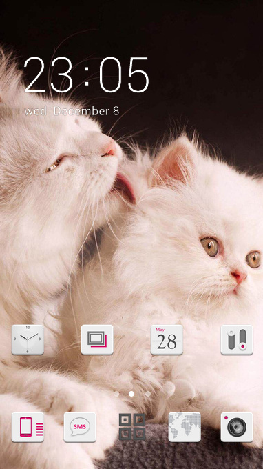 Cute naughty two cat