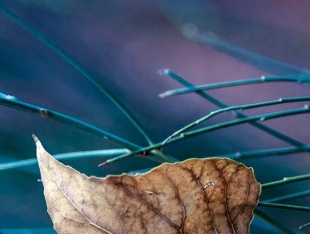leaves-macro-nature-qhd-144...
