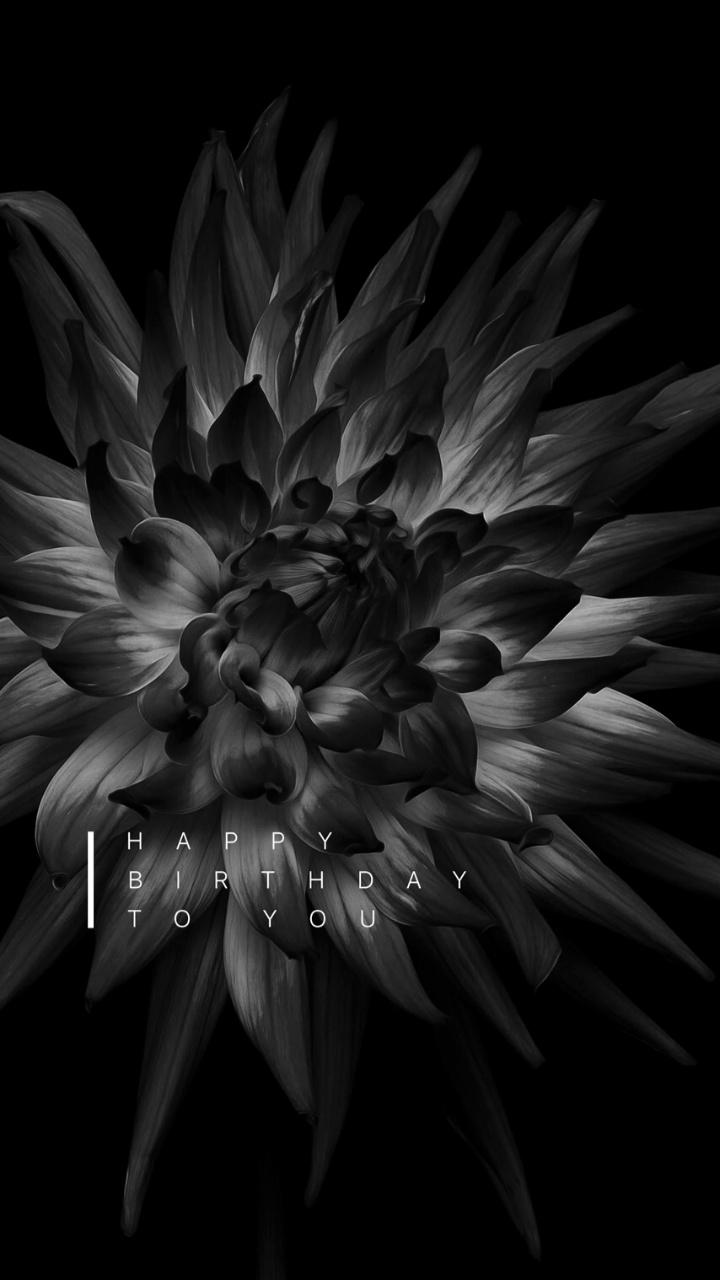 Black dahlia flower theme live hd wallpaper download free black dahlia flower theme live hd wallpaper izmirmasajfo