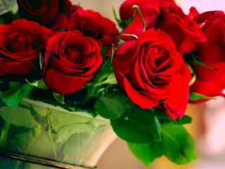 The wonderful roses!