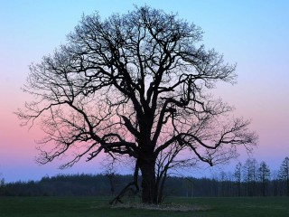 LONELY-TREE-ON-THE-FIELDR