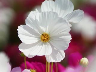flowers_petals_nature