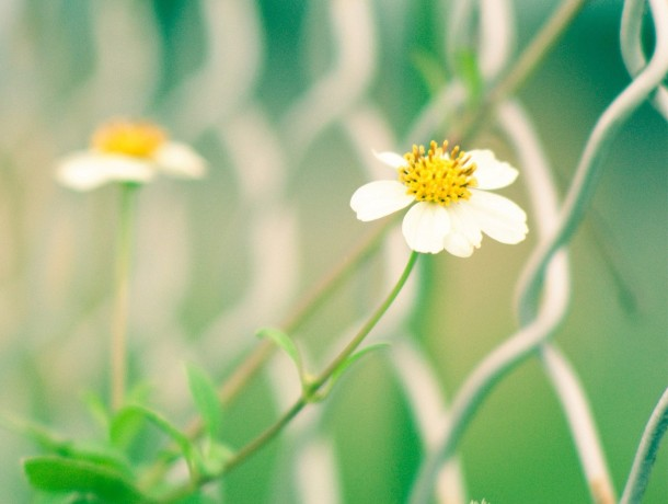 White-yellow-wildflowers-fe...