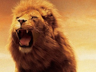 lion-hd-wallpapers-4