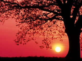 Germany oak spring sunset awesome wallpaper