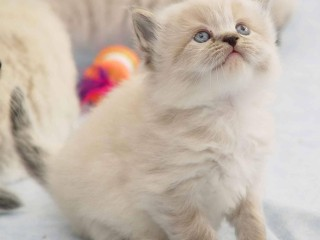 CUTE CAT KITTEN