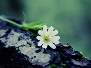 flower_on_a_log-flowers