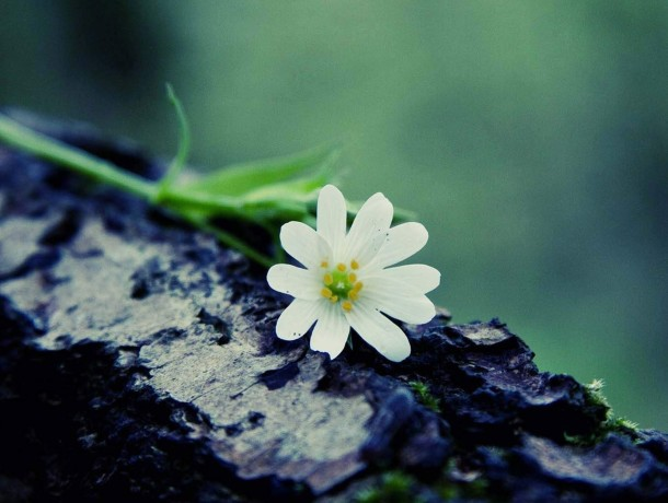 FLOWER_ON_A_LOG-FLOWERS
