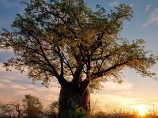 Africa-Zimbabwe-savanna-nat...