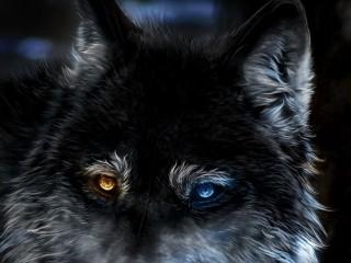WOLF-HETEROCHROMIA-FANTASY-...
