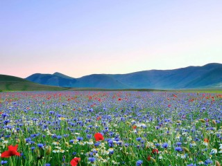 field-of-wildflowers-flower