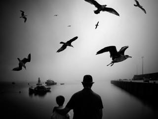 Migratory birds fly