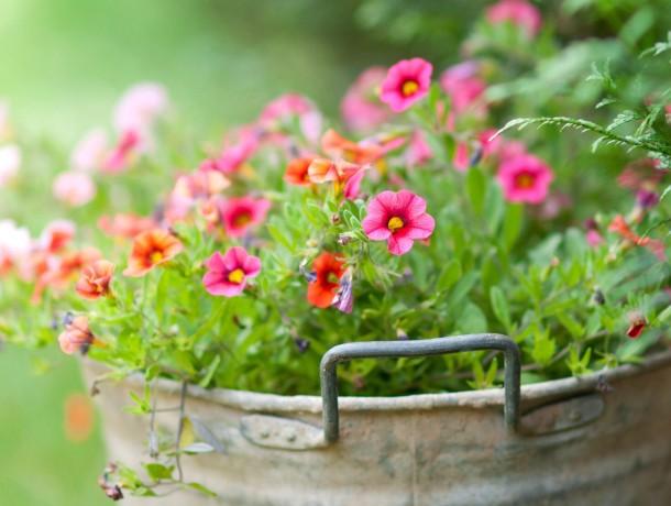 LITTLE-FLOWERS-IN-THE-BUCKE...