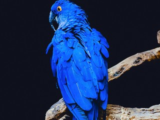 parrot /wallpaper.jpg