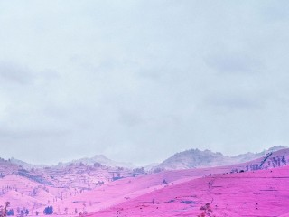pink-field-democratic-repub...