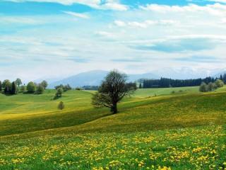 dandelion-hills0