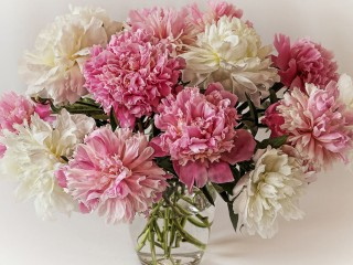 A-bouquet-of-peonies-white-...